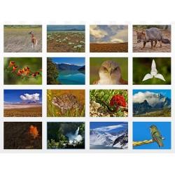Postales Un Paseo por Chile