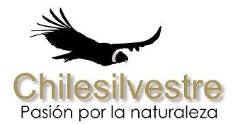 Chilesilvestre